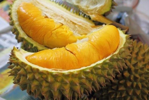 kalori durian